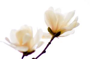 vacker blomma